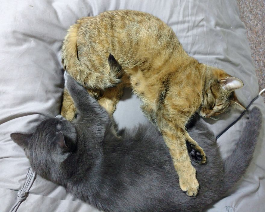 cat scratching back of ears