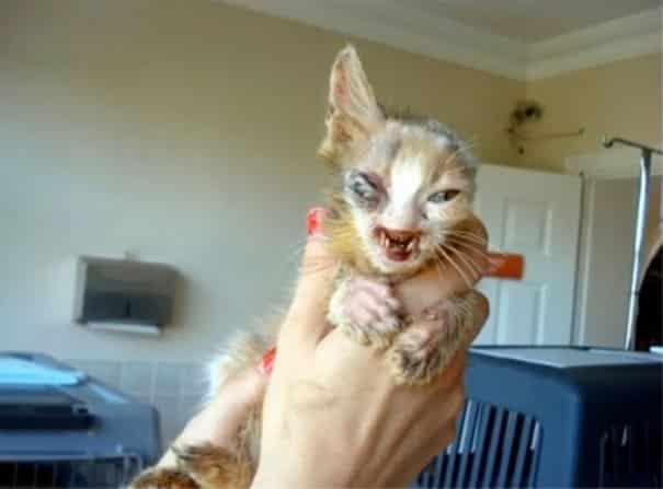 изродованый котёнок на руках