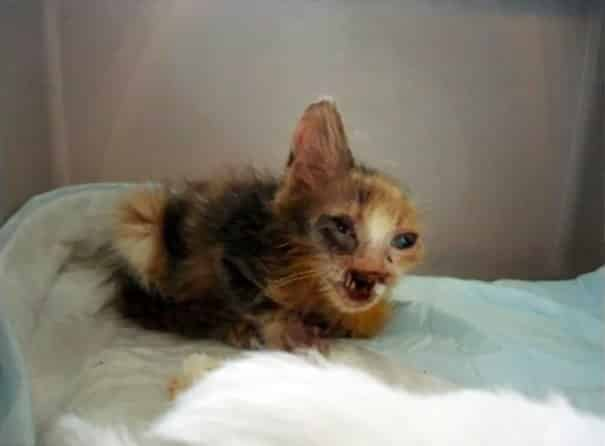 изродованый котёнок на кровати