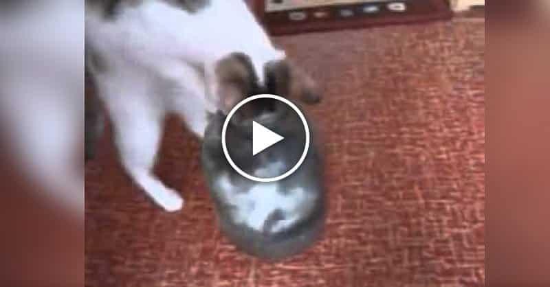 кошкины сказки