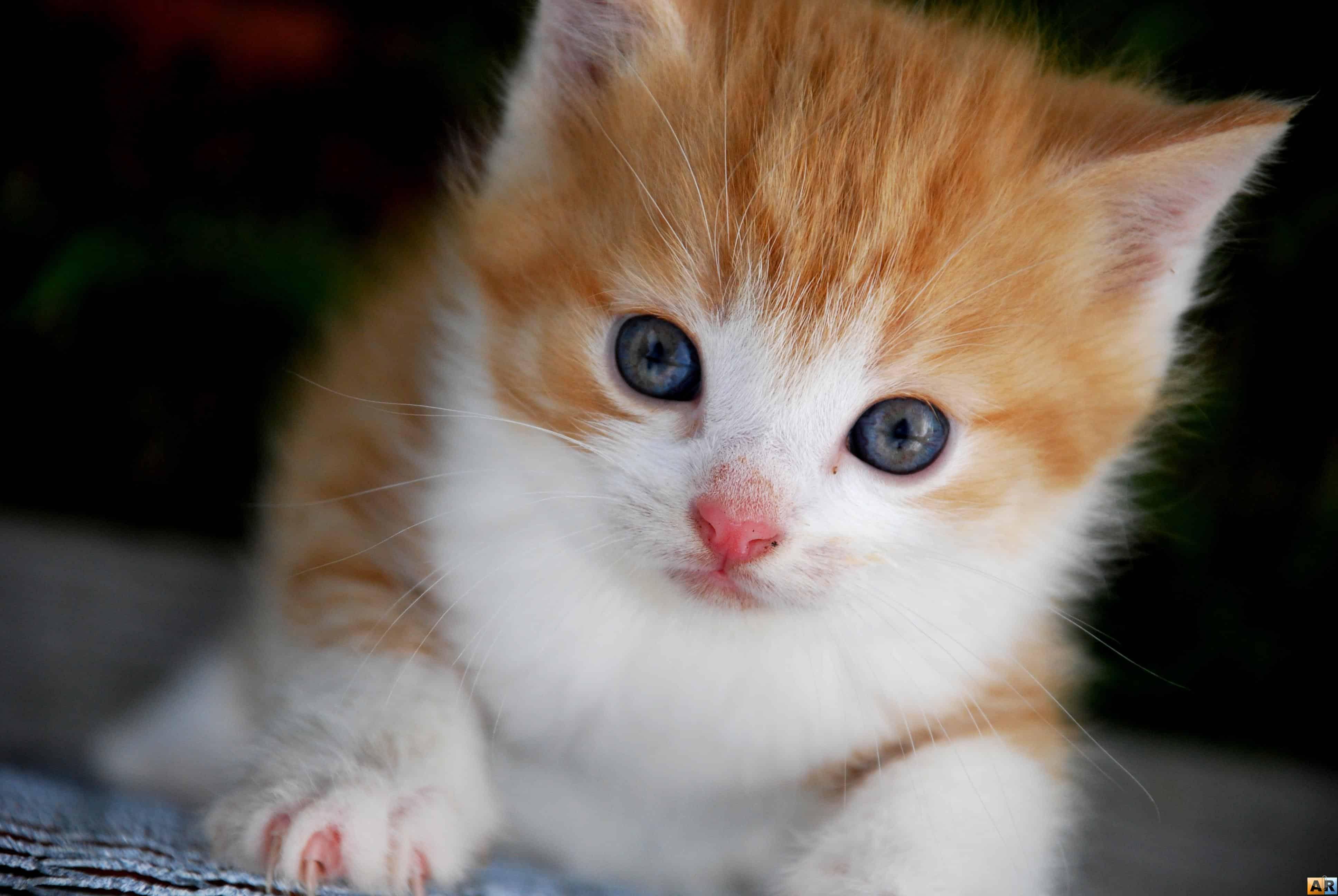 Котята фото скачать на телефон бесплатно