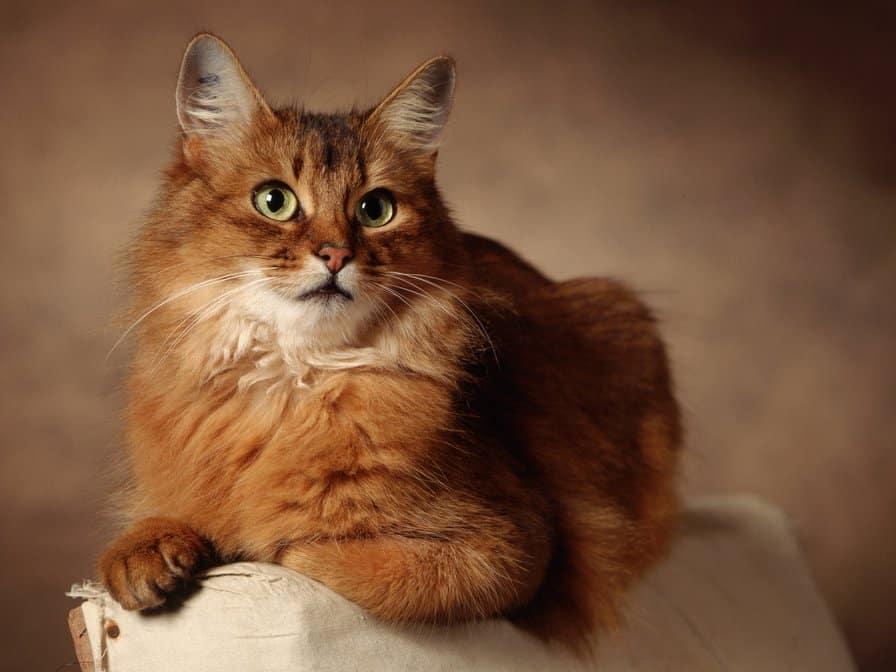 Кот мог бы съесть своего хозяина