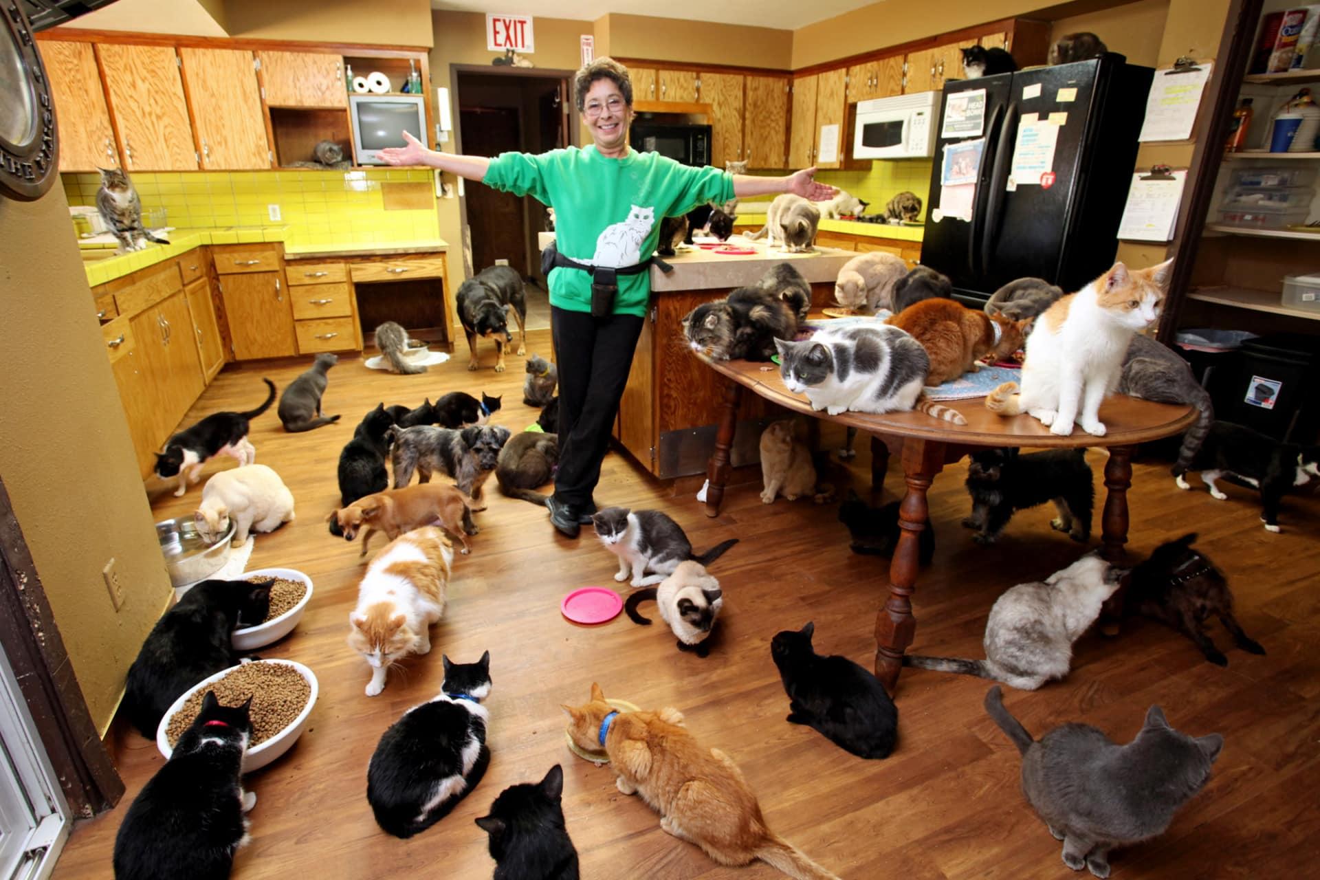 House cat species list