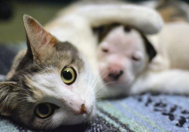 видов термобелья умерли в один день кошка и собака молодые Ссылки Агентство