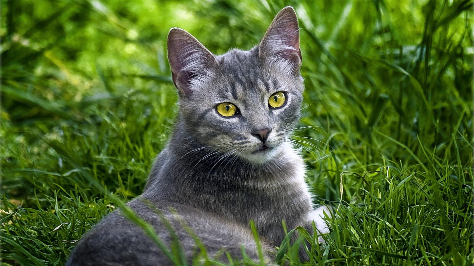 Почему коты ласковые по утрам
