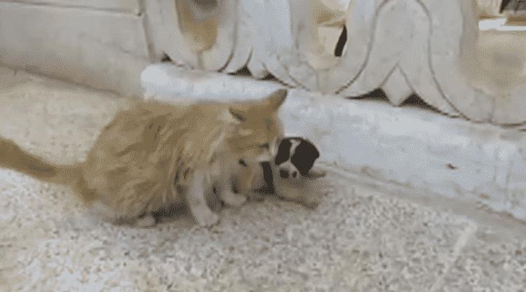 Кошка услышала плач осиротевшего щенка, ее реакция – это просто прелесть!